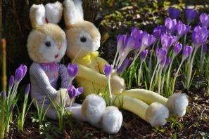 rabbit-2137741_1920
