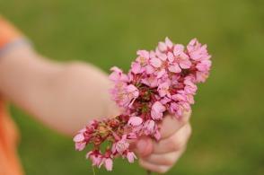 flower-667951_1920