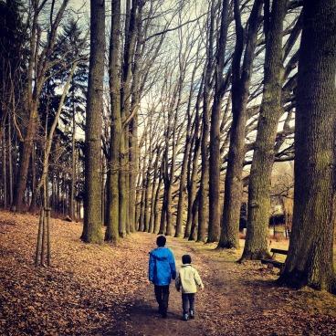 trees-969138_1280